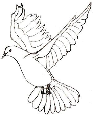 лапки птиц фото